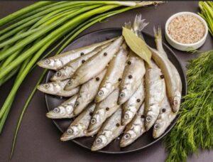 AliceAcciuga, European anchovy