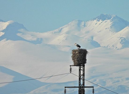 Aragats Mountain and Storks.