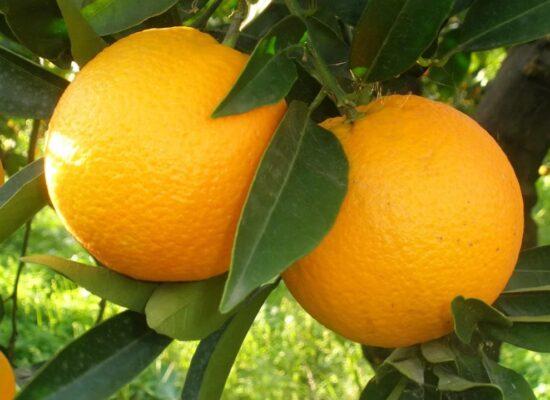 Orange - Arancia