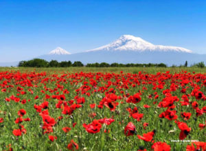 Mount Ararat (Sis and Masis) and a field of red poppies, near Yeraskh Village, Ararat Province.