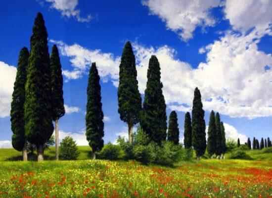 Beyond the Trees, Raffaele Fiore