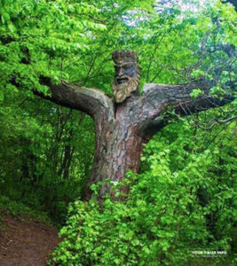 King of Forest, Dilijan