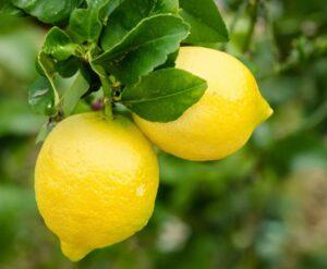 Lemon - Limone