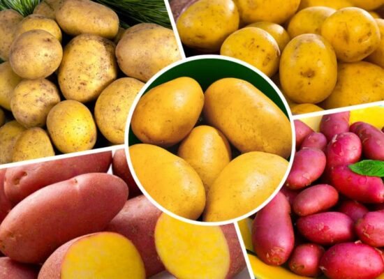 Potato - Patata