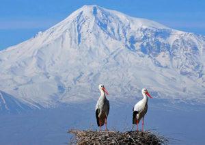 Storks' Village