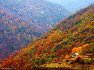 Tavush Province