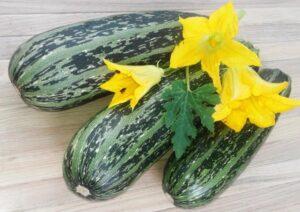 Zucchini - Zucchine
